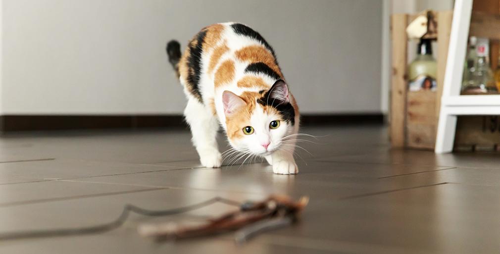 Aufnahme unsere Katze Curry beim Spielen