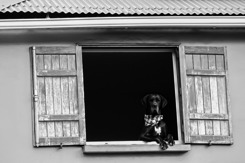 Aufnahme eines Hundes auf der Insel La Reunion