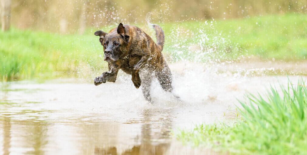 Tierfotografie: Fotoshooting mit dem Mischlingsrüden Corbi