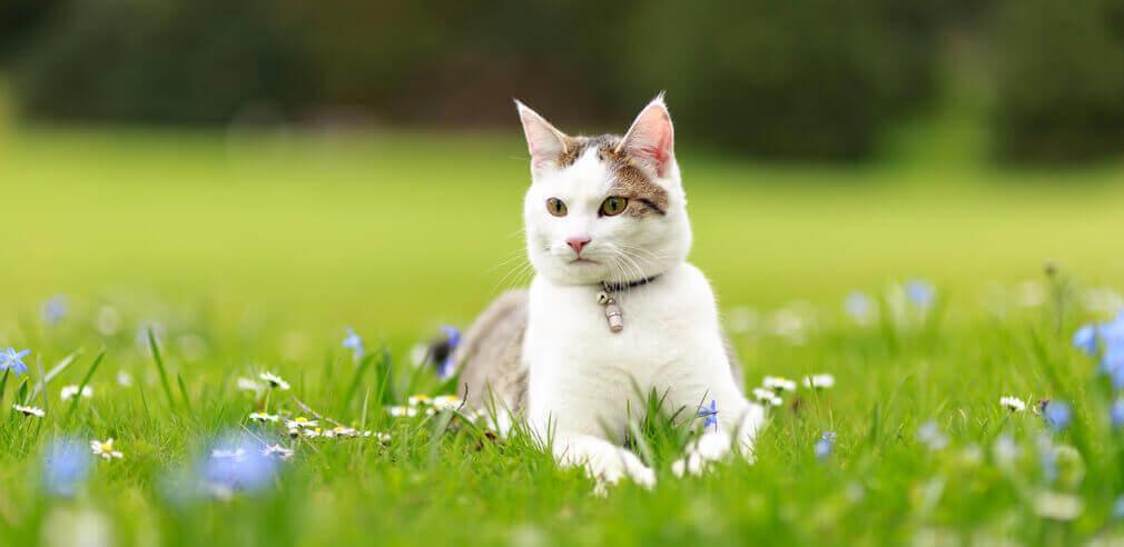 Tierfotografie: Aufnahme einer Katze liegend im grünen Gras im Wenkenpark bei Basel und Lörrach