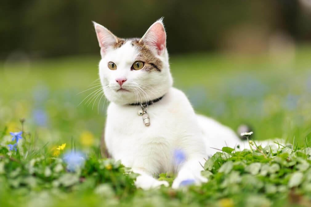 Tierfotografie: Aufnahme einer Katze im Wenkenpark bei Basel und Lörrach