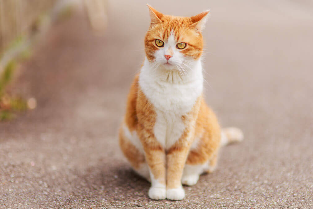 Das leben einer freiganger katze in riehen photo passionnet for Wei e küchenstühle