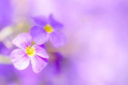 Blumenfotografie: Ein Traum in Lila