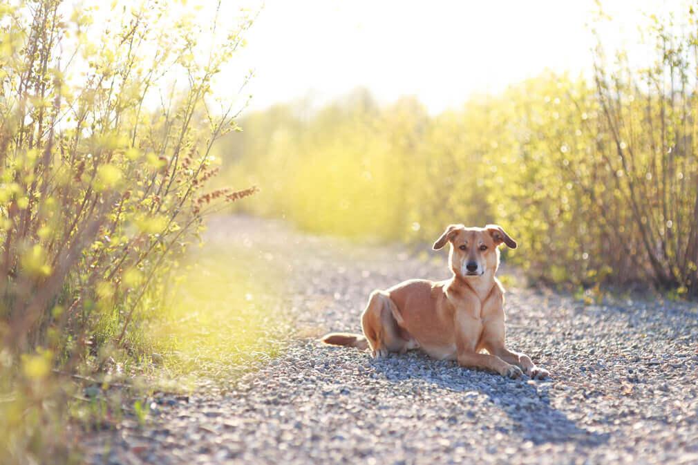 Tierfotografie: Aufnahme unseres Windhundmischlings Safran in Grenzach nahe Basel