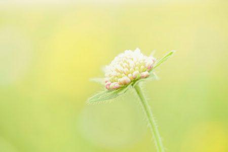 Fotografie rund um Basel: Makroaufnahme einer zarten grün-gelben Blüte auf einer Blumenwiese