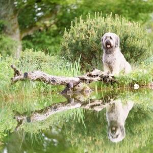 Tierfotografie rund um Basel und Möhlin: Portrait von Tobi mit einer Spiegelung im Wasser