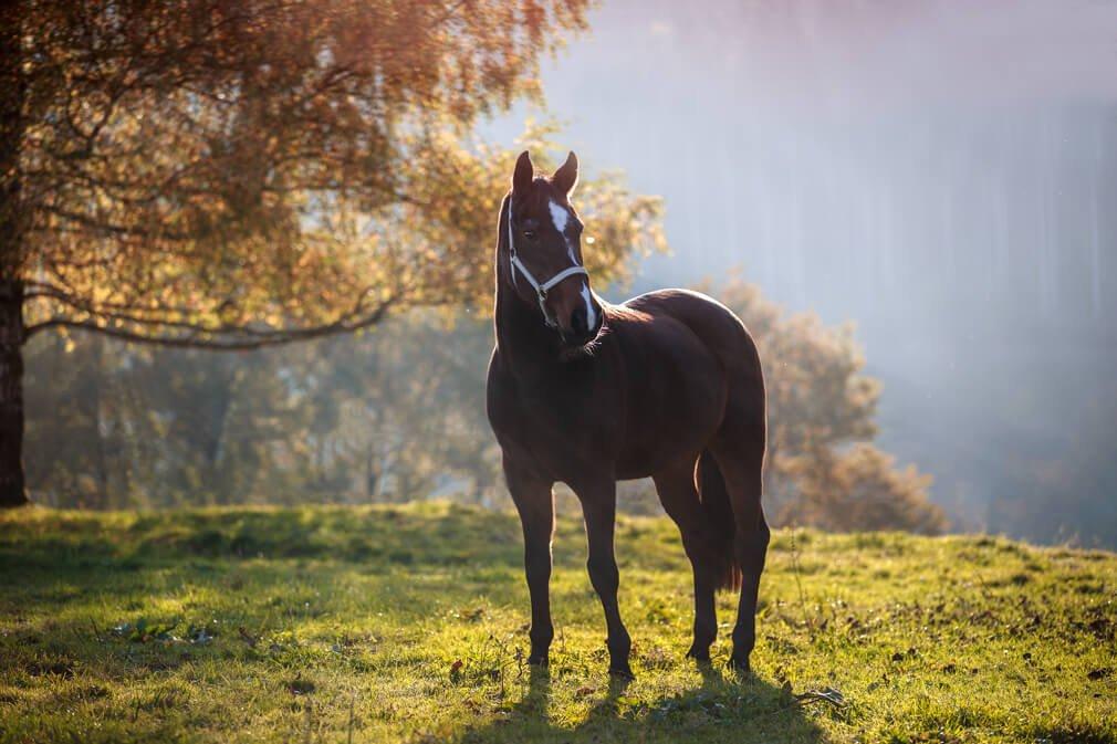 Tierfotografie rund um Basel und Möhlin: Fotoshooting mit Lagitta einer braunen Stute