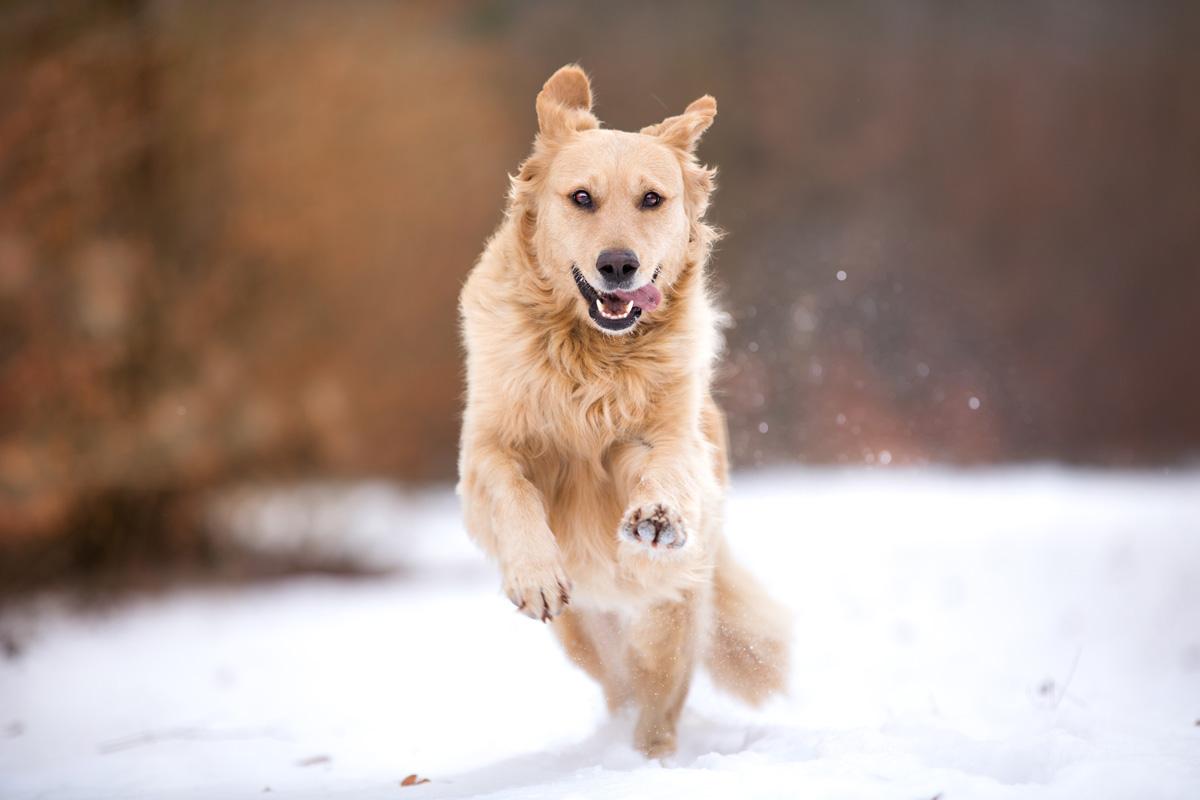 Buffy rennt im Schnee