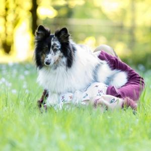 Tierisches Fotoshooting mit Sheltie Lerry im Gras