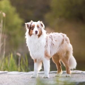 Hundefotoshooting mit Maylo im Grütt Park Lörrach