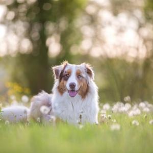 Tierfotografie Schweiz: Maylo geniesst die Abendsonne
