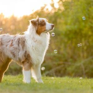Hundefotoshooting in Lörrach: Maylo im Gegenlicht mit Seifenblasen