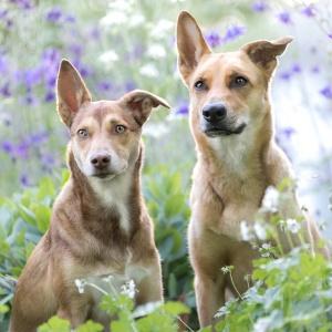 Zwei Mischlingshunde zwischen Blumen