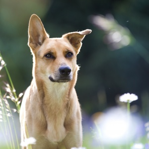 Hundefotografie Schweiz: Mischlingshündin Zoe im Portrait fotografiert
