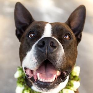 Das Lächeln eines Hundes