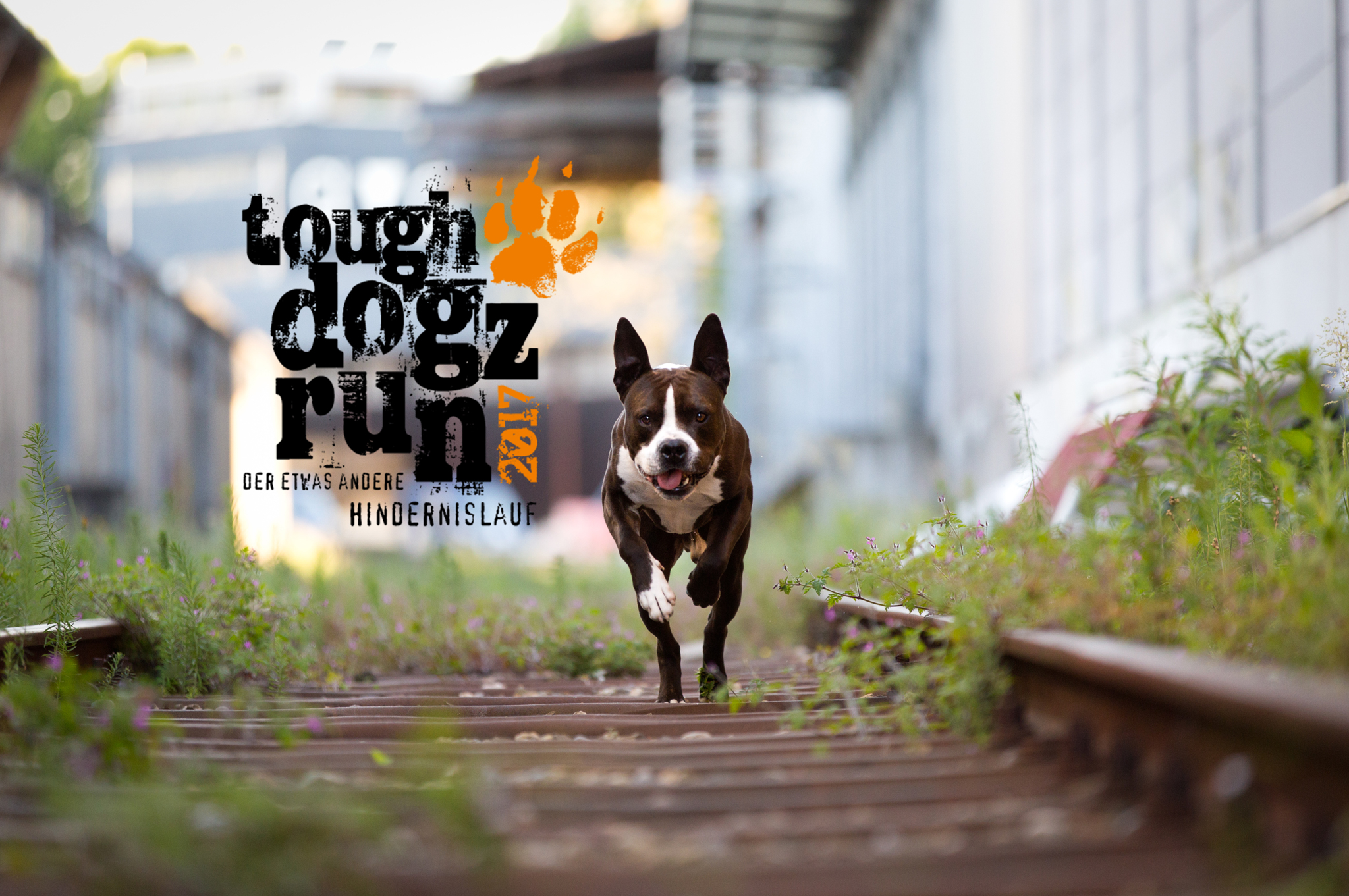 Though Dogz Run
