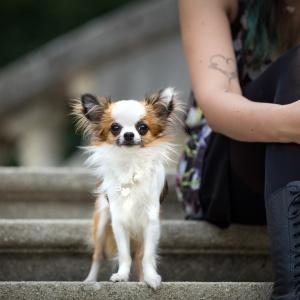 Bambi neben Vanessa auf einer Steintreppe