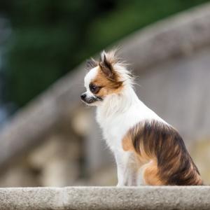 Bambi sitzt auf einer Steintreppe