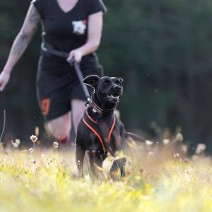 Tierfotografie in und um Basel: Fotoshooting mit Labradordame Ida