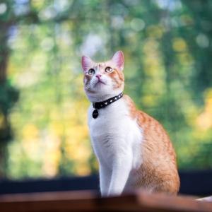 Tierfotografie Schweiz: Fotoshooting mit Katze Tiger in Basel