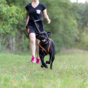 Hundefotoshooting in der Schweiz zum Tough Dogz Run 2017