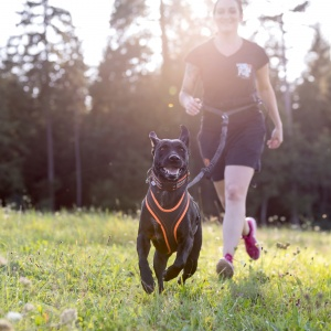 Tierfotografie in Basel: Fotoshooting zum Tough Dogz run