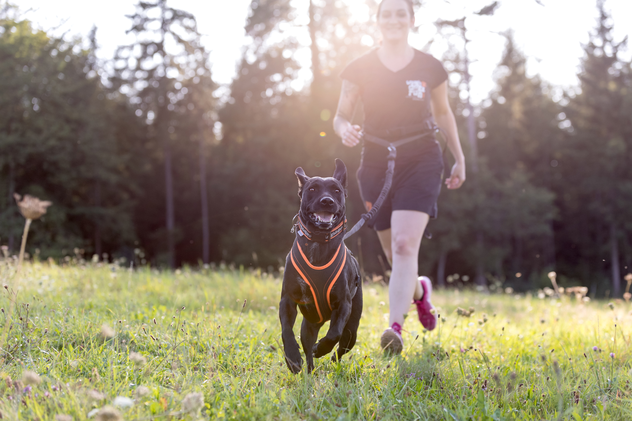 Tierfotografie in Basel: Fotoshooting zum Tough Dogz run