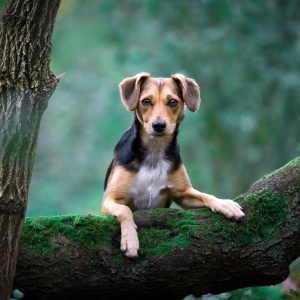 Tierfotografie: Mischling Miley auf einem Baumstamm