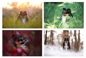 Hundefotografie in allen Jahreszeiten