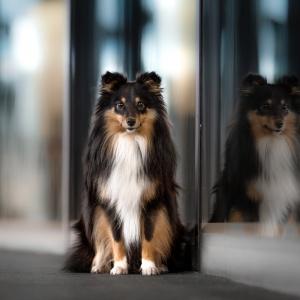 Hundefotografie in Basel: Spiegelung an der Messe in Basel