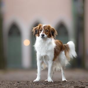 Hundefotografie in Basel