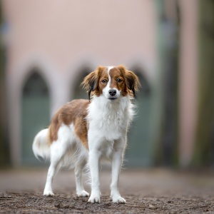 Tierfotografie rund um Basel: Kooiker Lucy