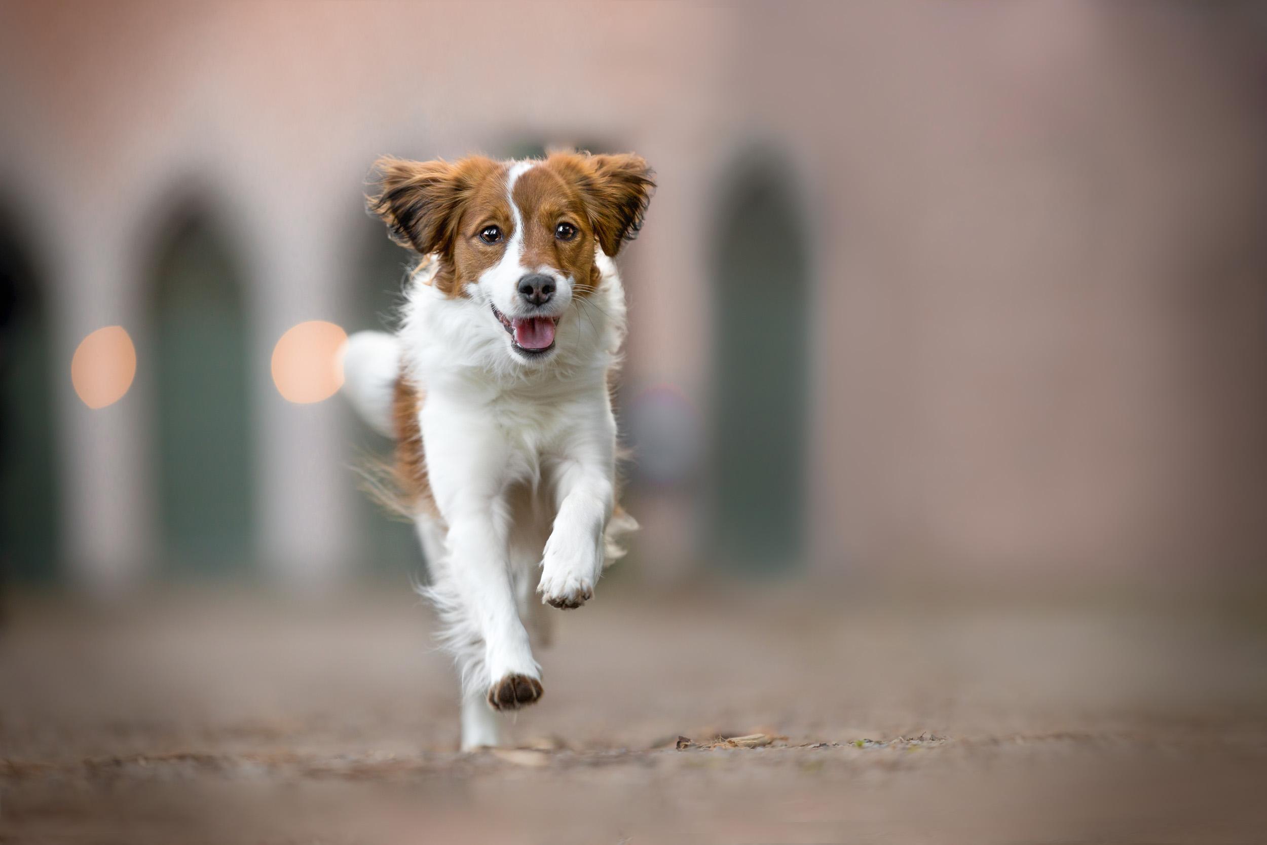 Kooiker rennt vor einer Kirche