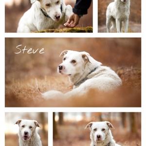 Hundefotografie Schweiz: Mischling Steve sucht ein neues Zuhause