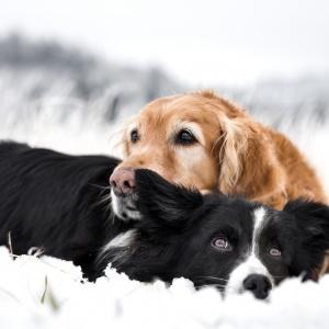Harmonie und Liebe unter Hunden