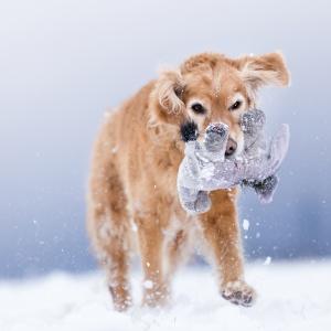 Wenn man Spass im Schnee hat