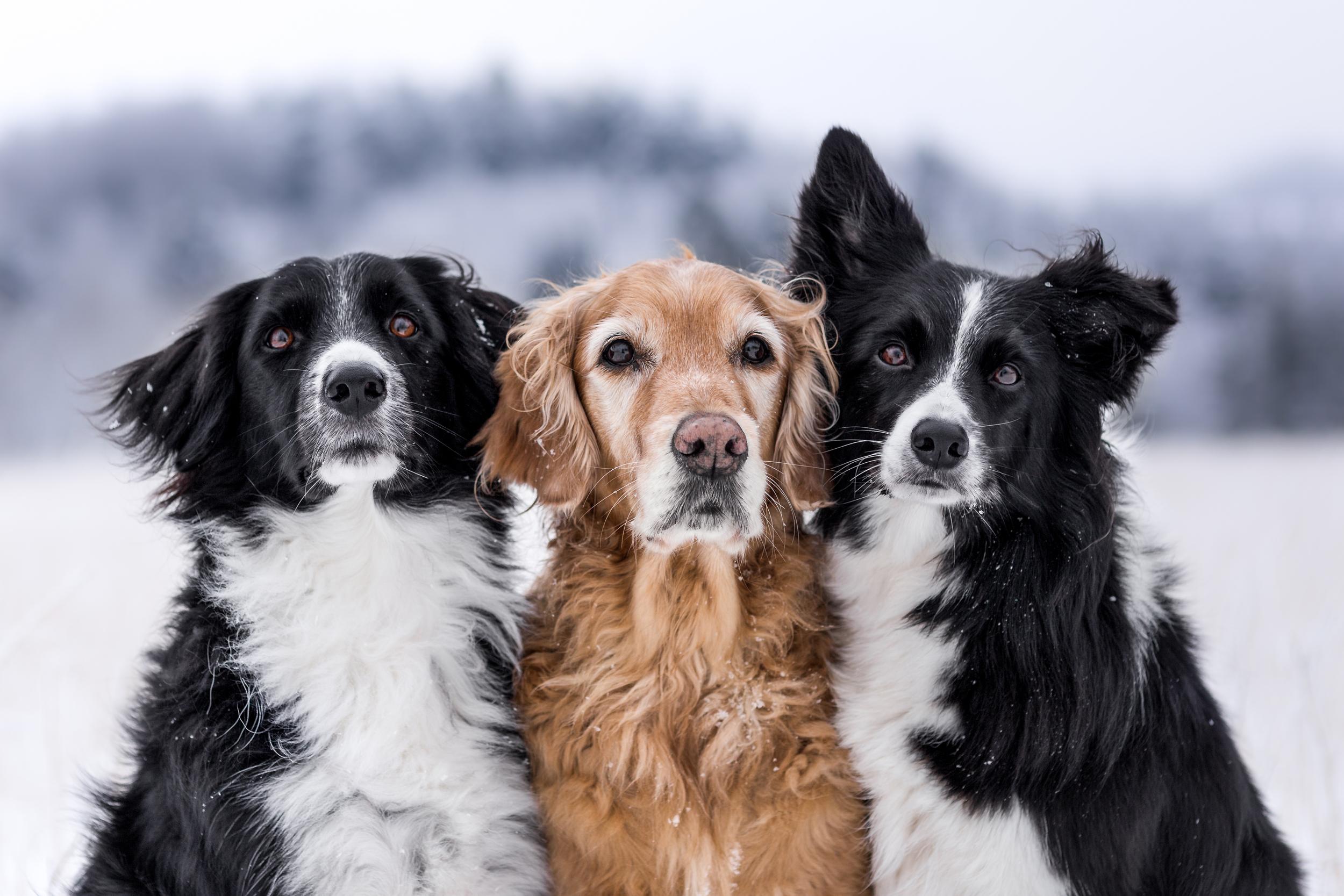 Ein Freundschaft unter Hunden