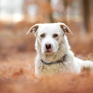Hundefotografie in der Schweiz: Mischlingshund Steve im Laubwald