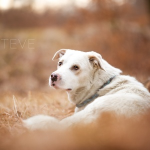 Mischlingshund Steve im Wald