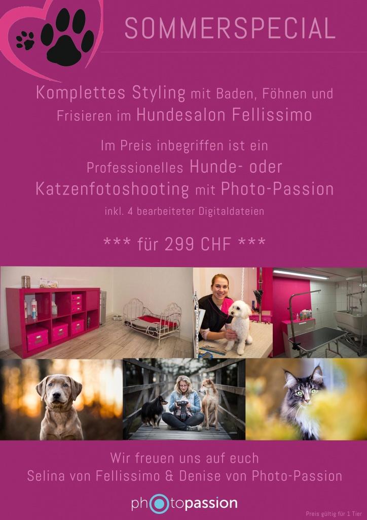 Sommerangebot Hundestyling und Hundefotoshooting in der Schweiz