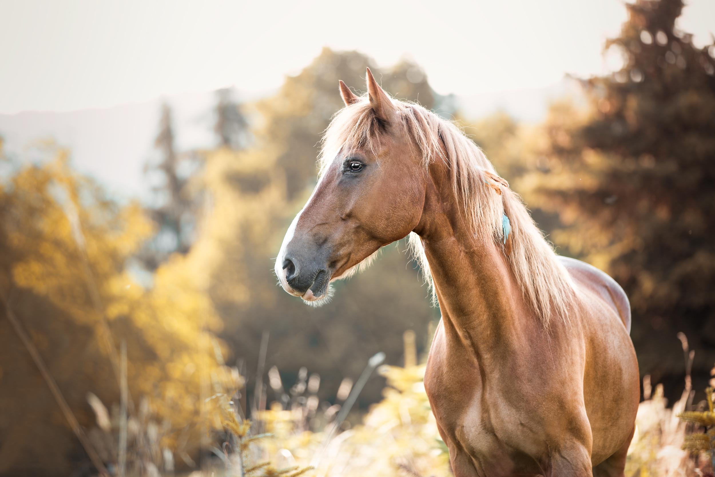Im Morgenlicht steht Pferd Finley auf einer Wiese bei Wehr