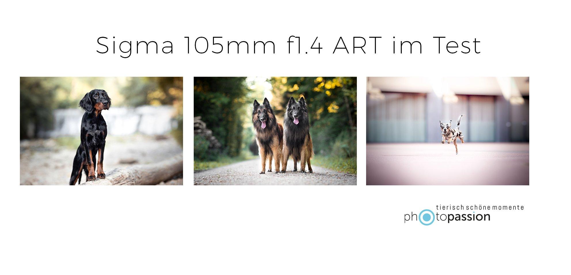 Hundefotografie in der Schweiz