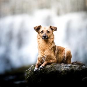 kleiner Mischlingshund im Platz vor einem Wasserfall
