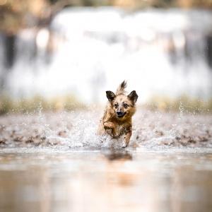 Mischling rennt hinter Ball im Wasser her