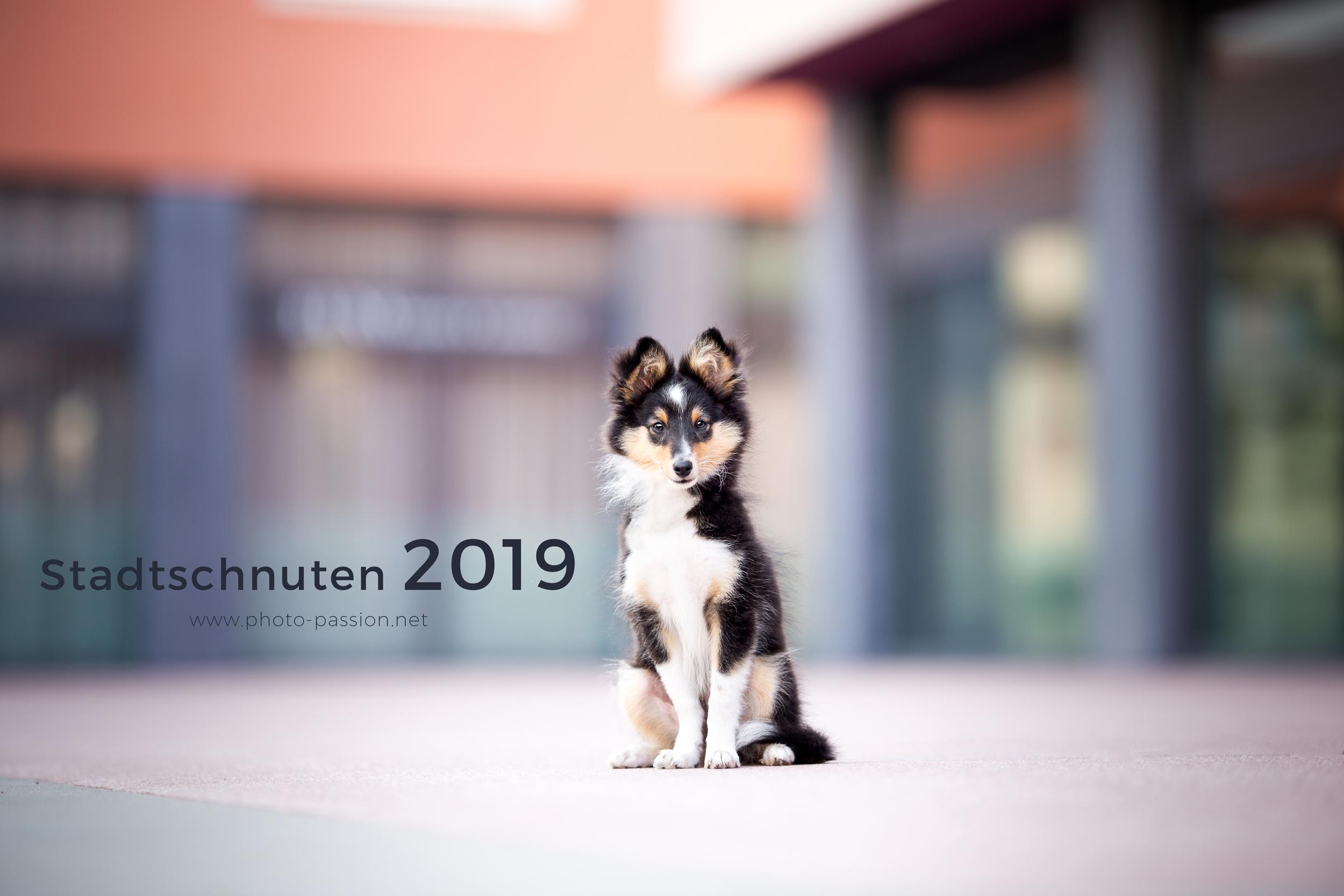 Sheltie ziert mein Deckblatt Hundekalender 2019