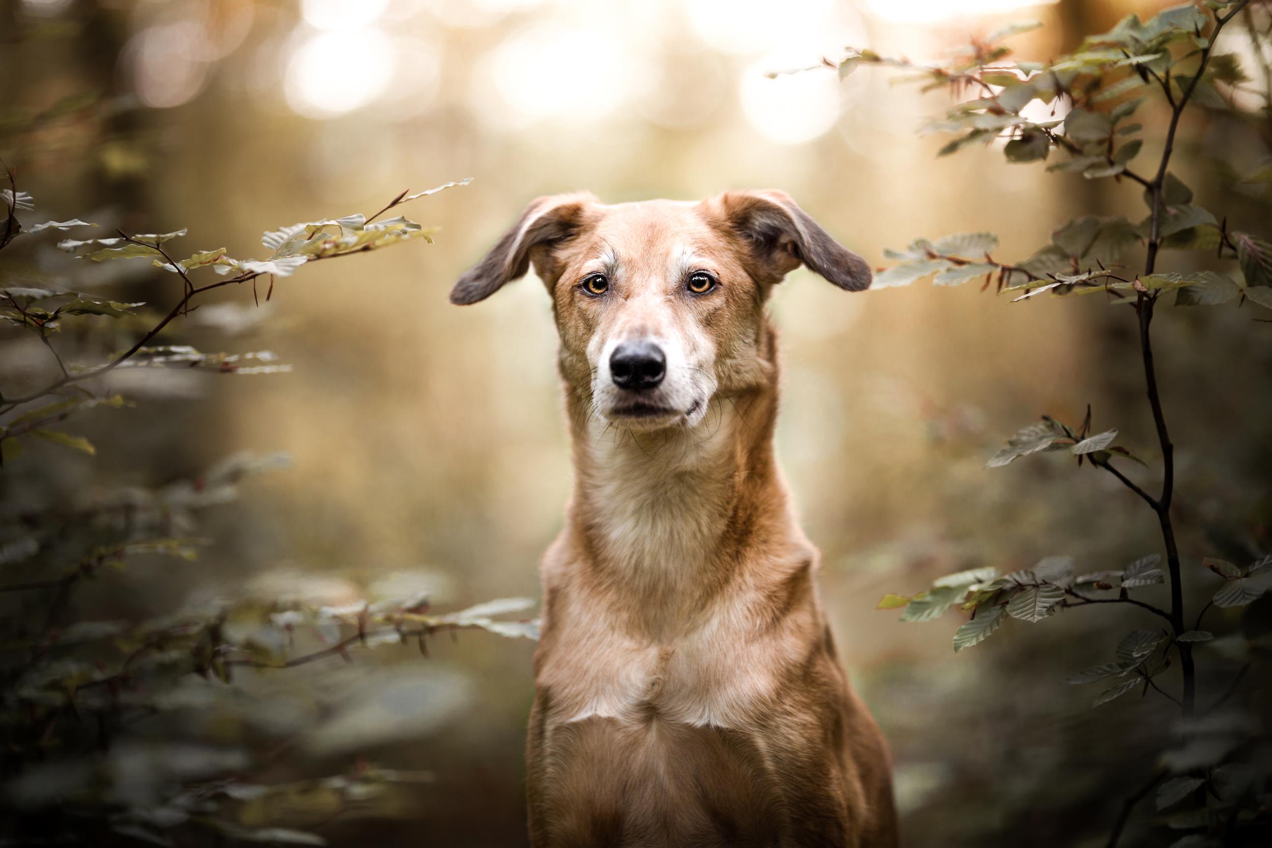 Windhundmischling sitzt im Wald bei Möhlin zwischen Buchen