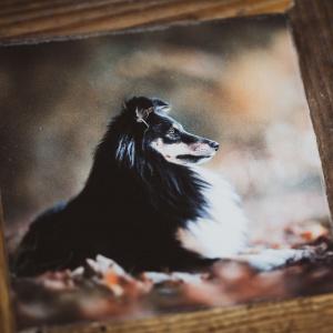 Foto eines Hundes im Holzrahmen