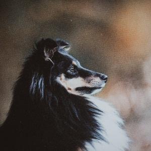 Hundefoto mit Holzrahmen Photo-Passion
