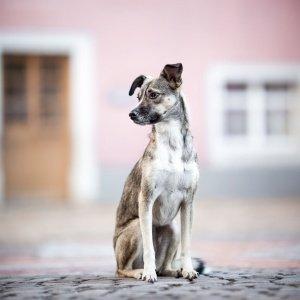 Hundefotografie Schweiz: Mischlingshuendin sitzt