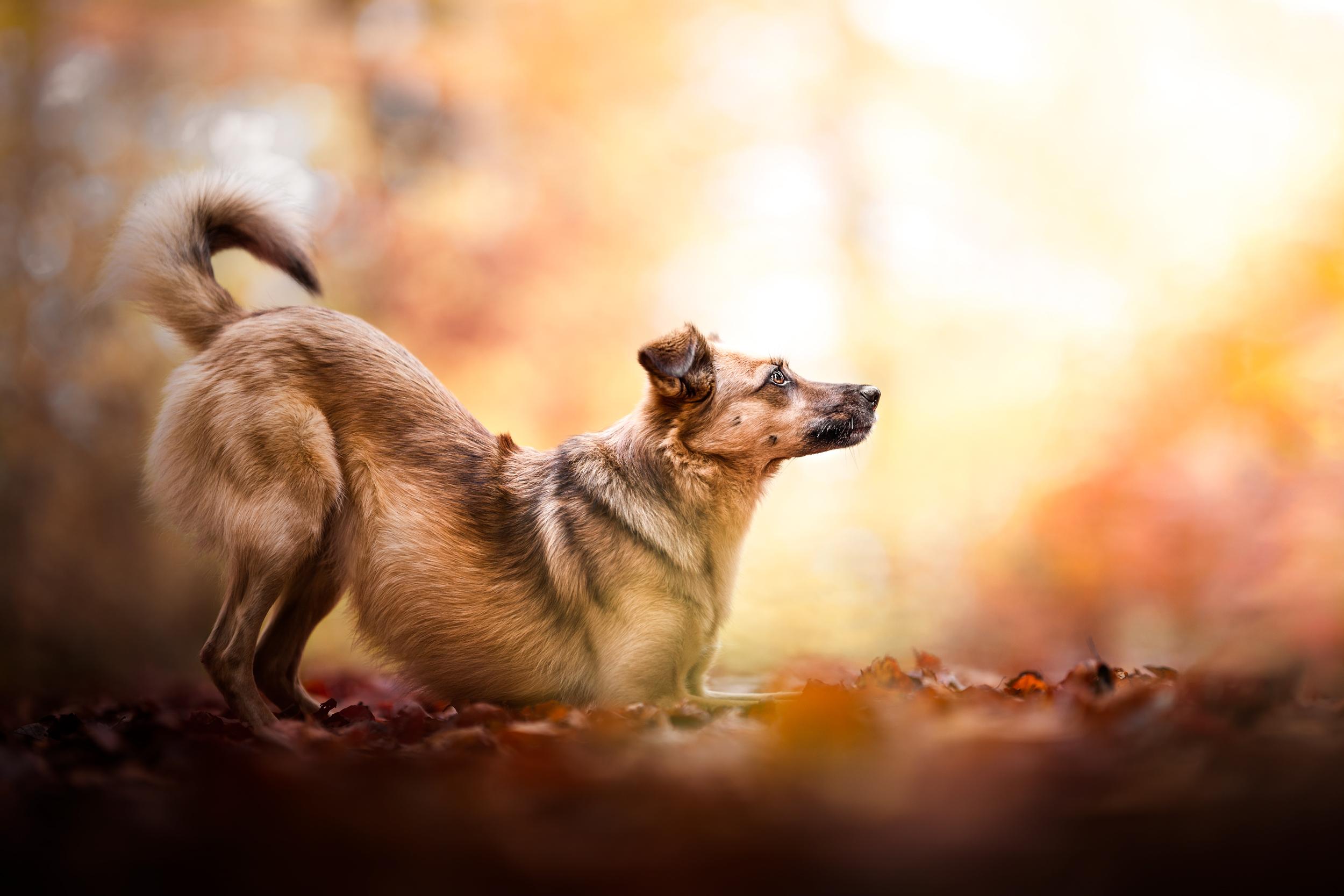 Mischlingshund im Laub in Moehlin